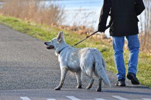 dog-leash-laws-boston-massachusetts lawyer