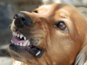 dog-attack-laws-massachusetts lawyer