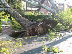 A tree is unrooted from the ground and bending over to the adjacent house