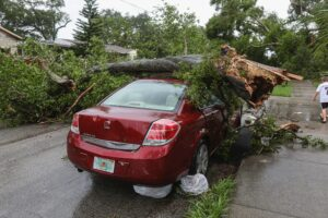 A tree fell on the top of a stationary car
